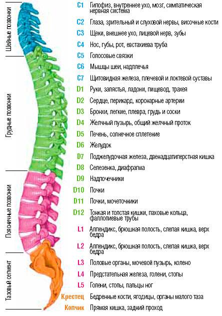 Кресла Kulik System - здоровое будущее успешного человека